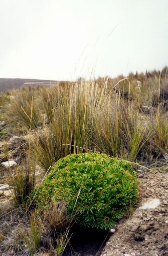 Other plant varieties