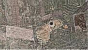 Geoglifos hechos con Waru Warus. Representacón de un Loro