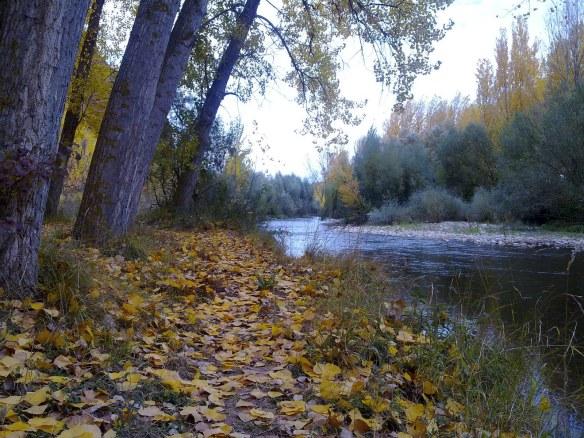 Riberas de los ríos forestadas