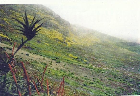 Lomas de Mongón en Casma