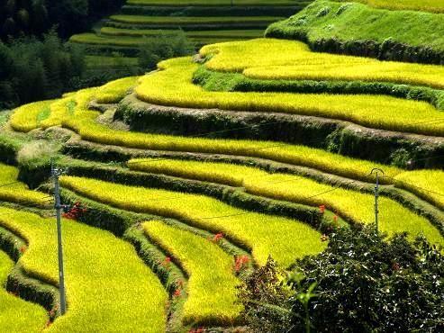 Comparación De La Política De Terrazas Entre Perú Y Japón
