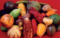 05 Diversidad de frutos nativos de los Andes.