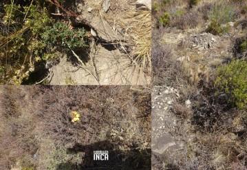 Plantas nativas que poco iban desapareciendo, vuelven a brotar y florecer