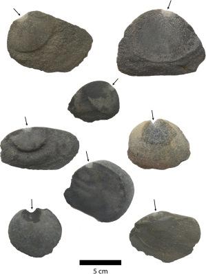 Hojuelas unifaciales de basalto más representativas. Depósitos que muestran plataformas marcadas y bombillas de percusión (flechas). (Foto Crédito: Tom D. Dillehay, Universidad de Vanderbilt)